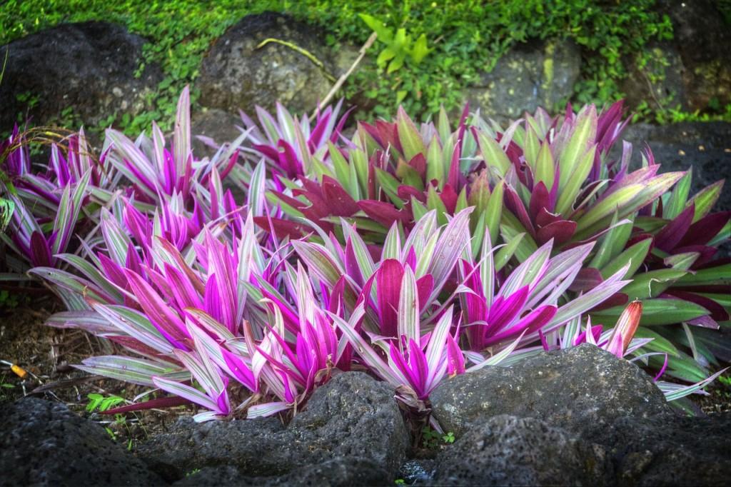 tropical-garden-213152_1280
